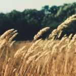 A Short Guide To Running An Agriculture Business
