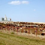 Ways to Make a Farm More Profitable