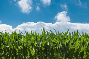 Cutting the Costs of Farming
